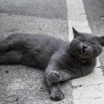 Katzen in der Toskana