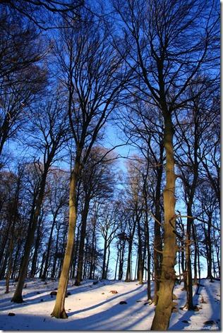 Im Wald bei Sassnitz