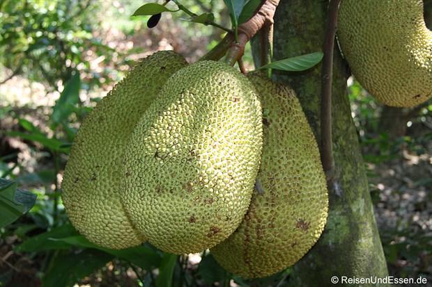 Vietnam - Jackfrucht