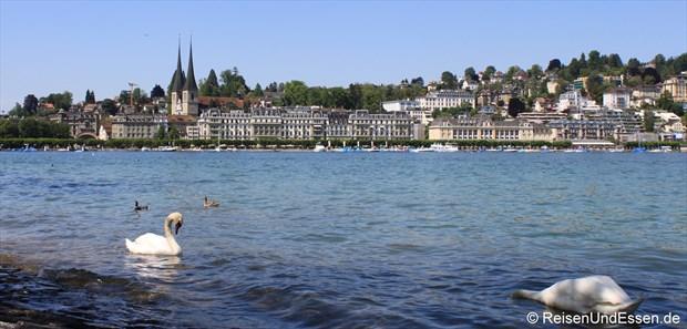 Luzern - Blick von der Uferpromenade mit Hofkirche