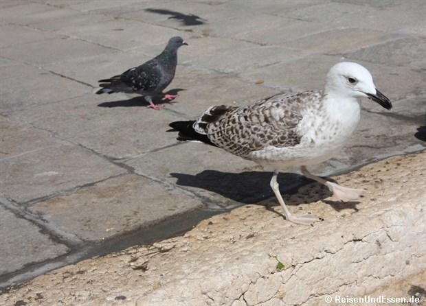 Möwe und Taube am Kanal
