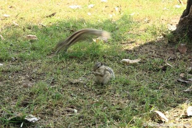 Oft gesehen: die Streifenhörnchen