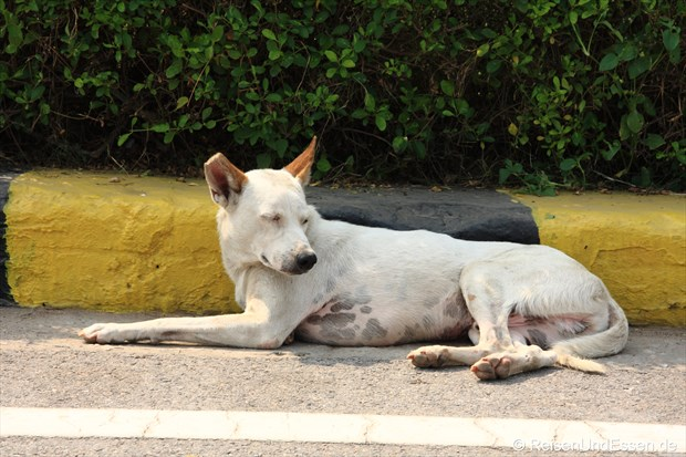 Eine der vielen Hunde auf den Strassen in Delhi