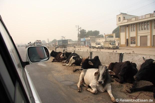 Relaxende Kühe in der Strassenmitte