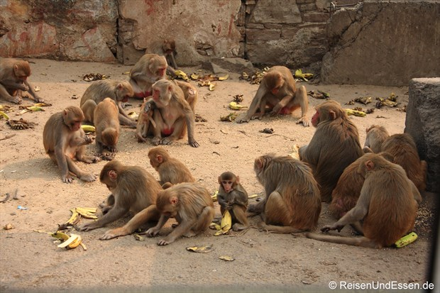 Affen am Strassenrand