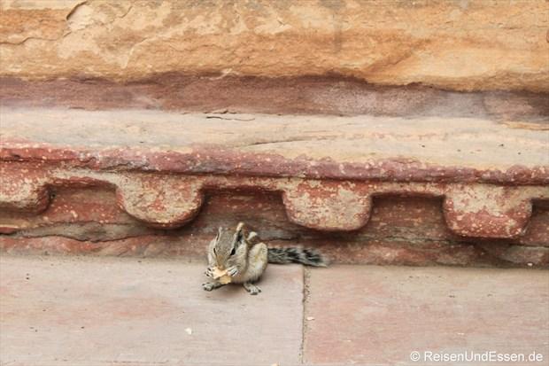 Ein Streifenhörnchen im Roten Fort in Agra