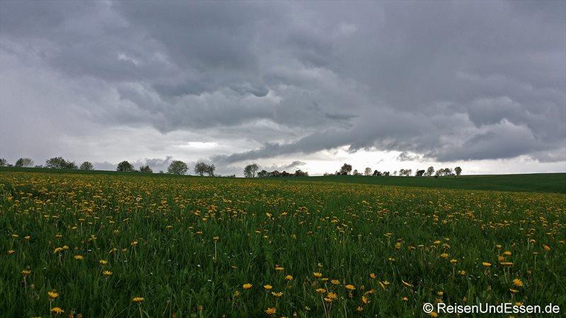 Auf der Frühlingswiese im Schwarzwald kurz vor dem Regen