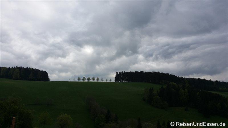 Baumreihe vor Regenwolken im Hochschwarzwald