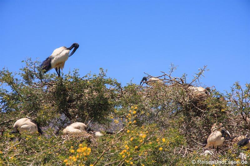 Vogelkolonie in Montagu