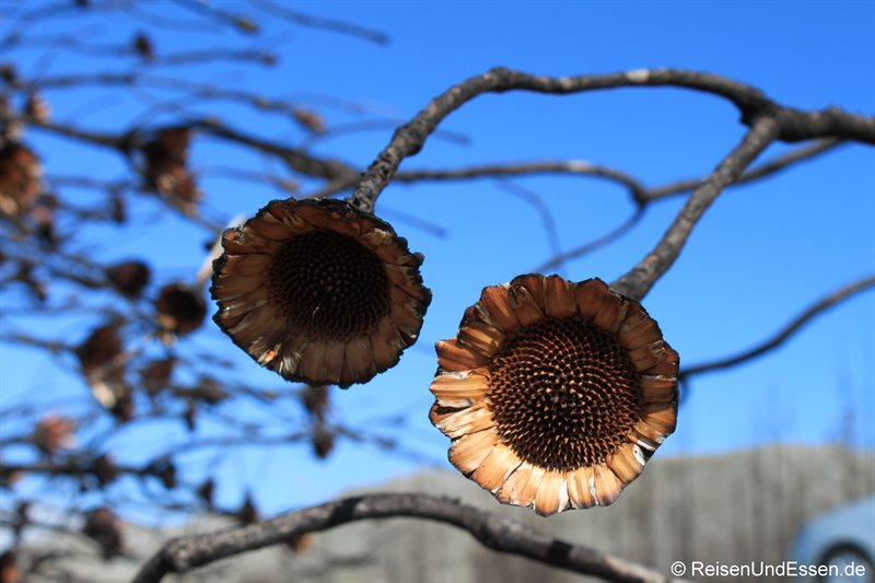 Skurrile Pflanzenwelt
