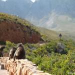 Von Hermanus über den Clarence Drive nach Kapstadt