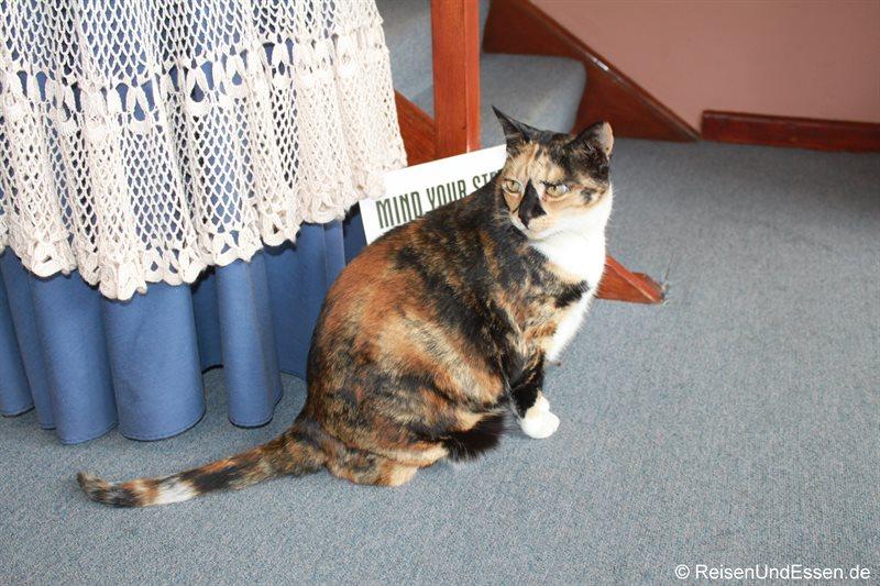 Katze im Miles Guest House