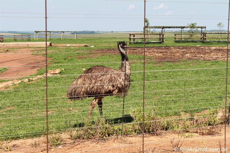 Rastplatz auf dem Weg zum Krüger Nationalpark