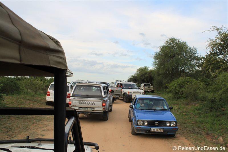 Verkehrschaos im Krüger Nationalpark