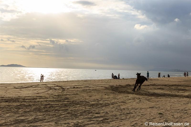 Pferd am Strand von Sanya