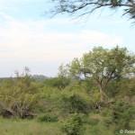 Fahrt und Landschaft im Krüger Nationalpark