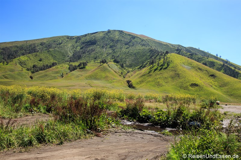 Hochsteppe im Bromo-Tengger-Semeru-Nationalpark