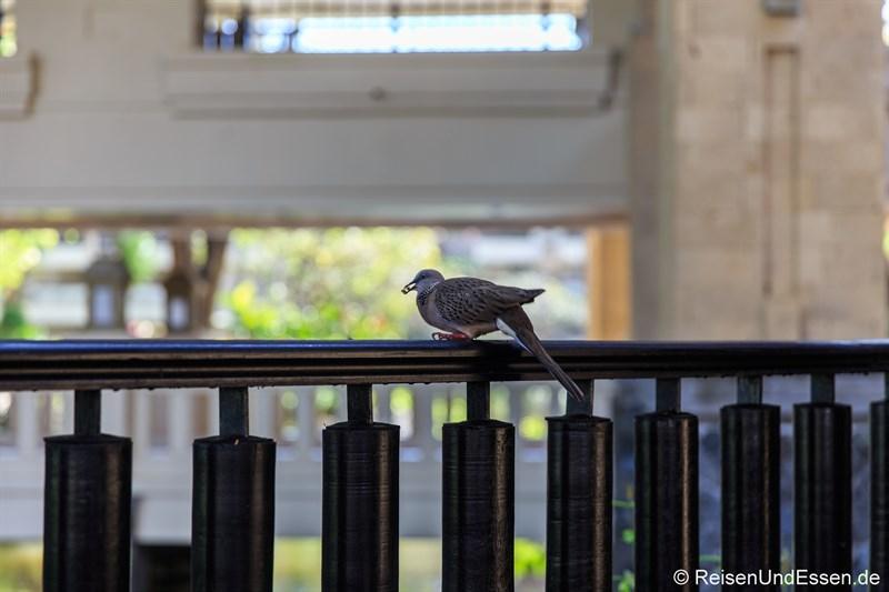 Vogel beim Frühstück