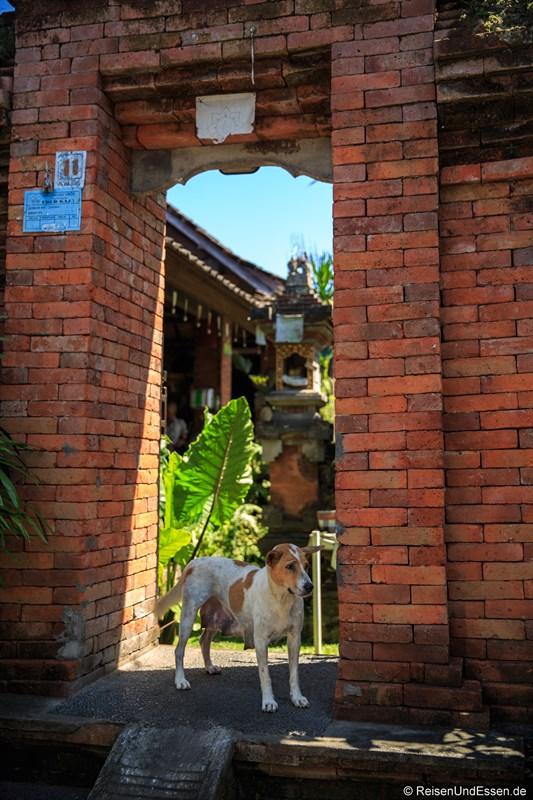 Hauseingang in Ubud