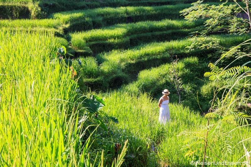 Fotoshooting in den Reisterrassen von Tegalalang