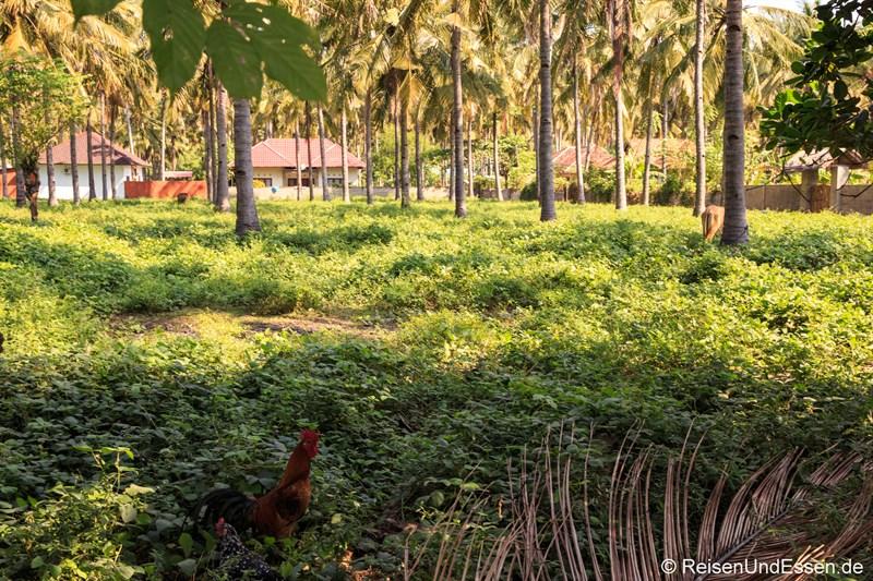 Inselinnere von Gili mit Hühner