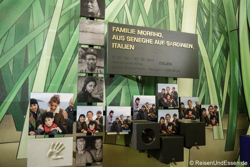 Senghe auf Sardinien im Klimahaus Bremerhaven