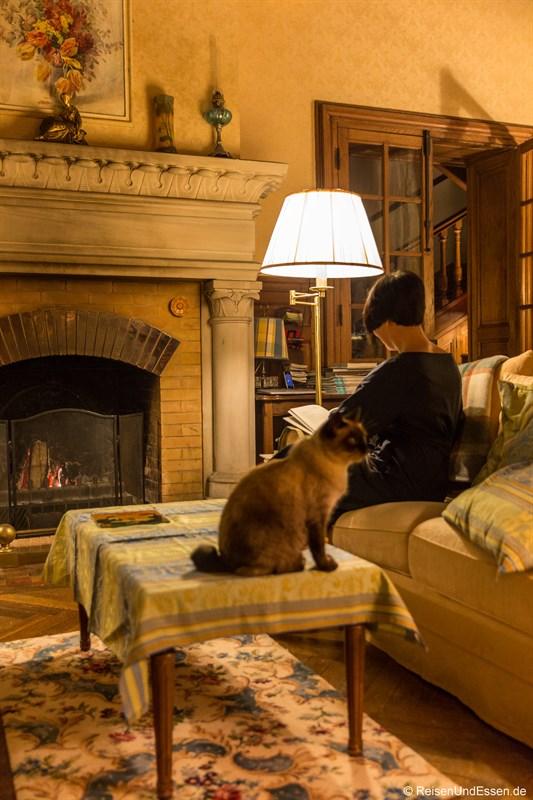 Wohnzimmer mit Kamin und Katze