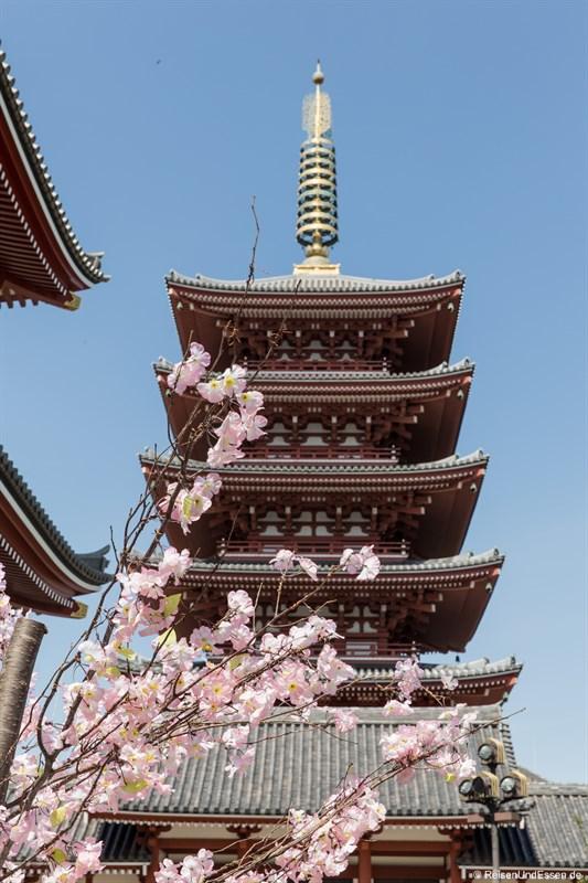Pagode mit Kirschblüten beim Senso-ji Tempel