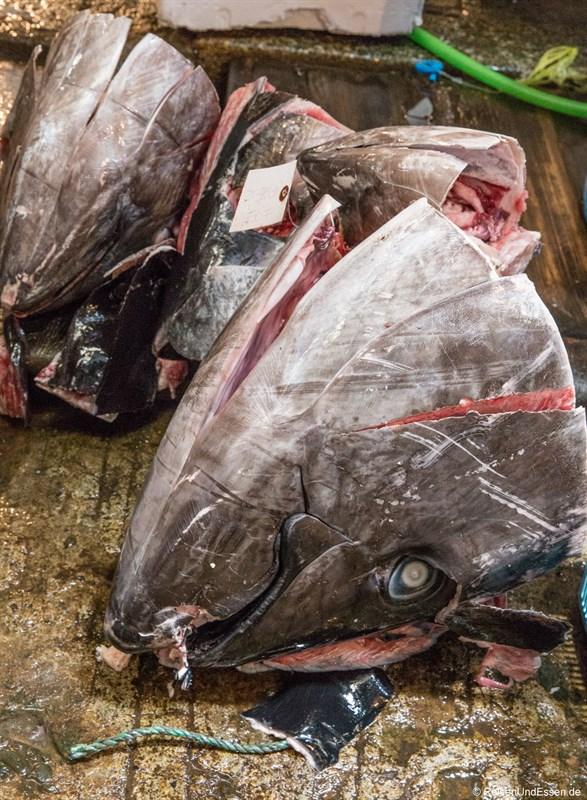 Kopf eines Thunfisch