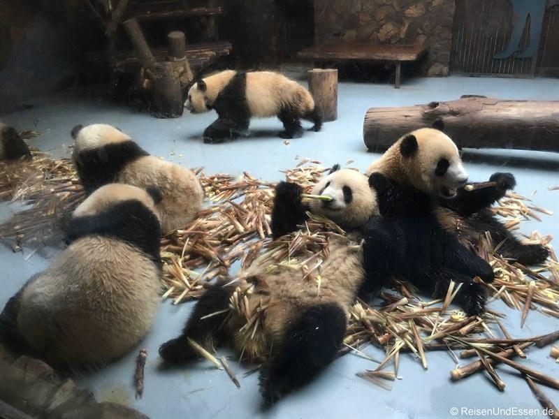 Panda in der Kinderstation