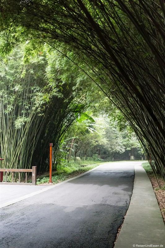 Allee mit Bambusbäumen