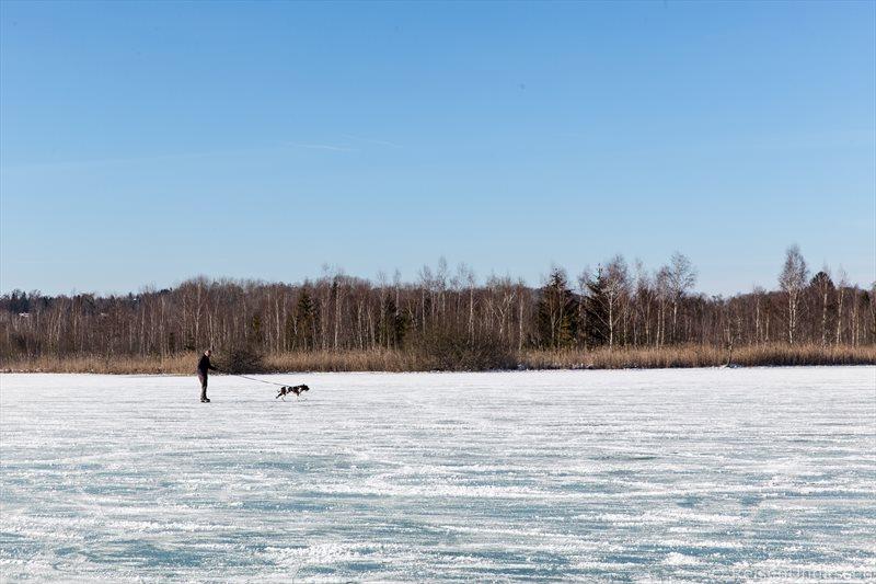 Schlittschuhlaufen mit Hund auf dem Wörthsee