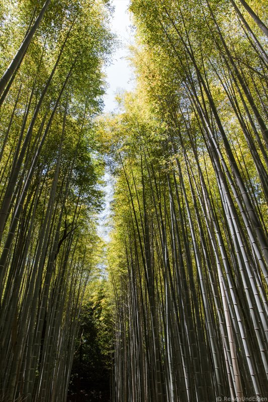 Bambusgipfel in Sagano in Kyoto