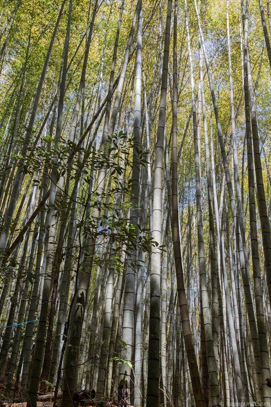 Bambuswald beim Tempel Saiho-ji in Kyoto
