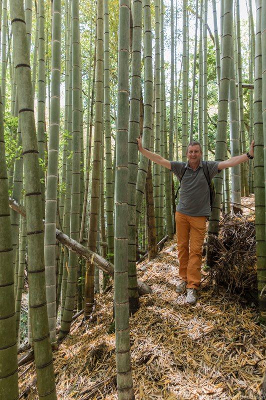Unterwegs im Bambuswald bei Saiho-ji in Kyoto