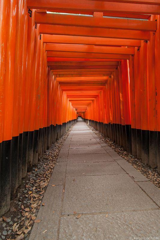 Innenansicht des Weg mit Torii