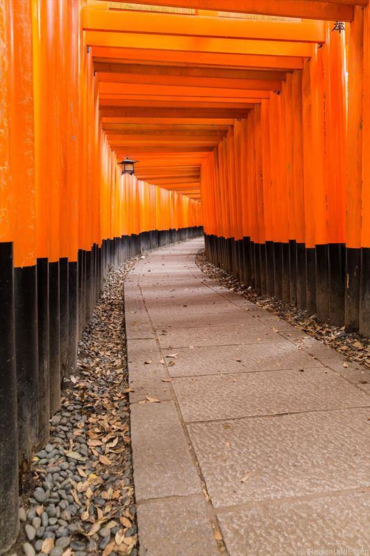 Menschenleeres Fushumi Inari in Kyoto