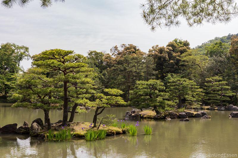 Bonsaibäume im goldenen Pavillon