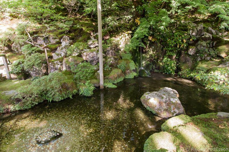 Teich mit Münzen im japanischen Garten