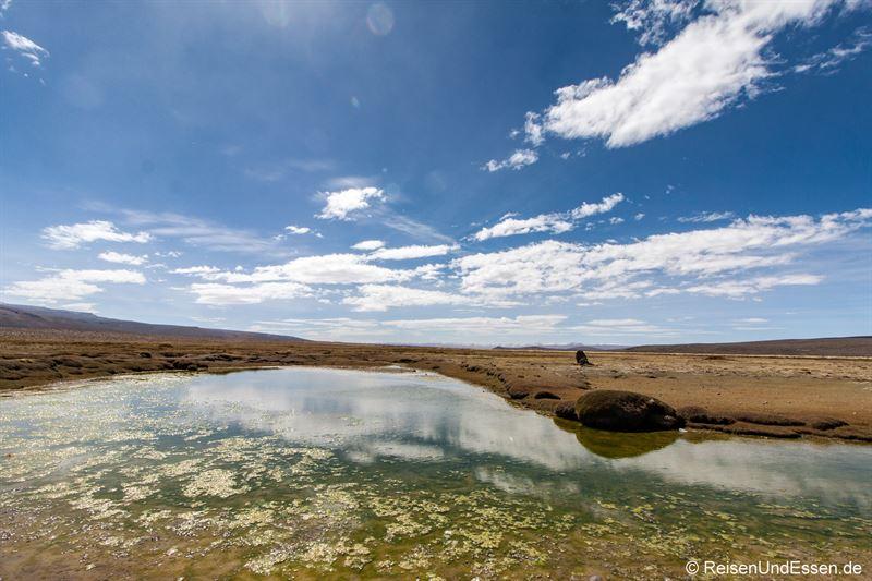 Teich auf dem Altiplano mit Spiegelung
