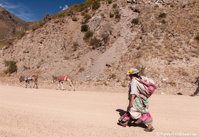 Peruanerin mit Mauleseln