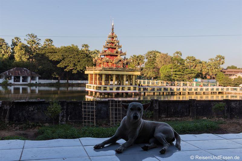 Hund beim Naung Daw Gyi Mya Tha Lyaung in Bago