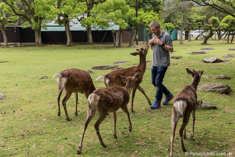 Füttern der Hirsche im Narapark