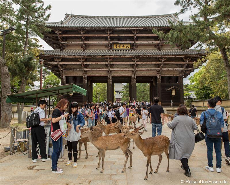 Hirsche auf dem Weg zum Nandaimon in Nara