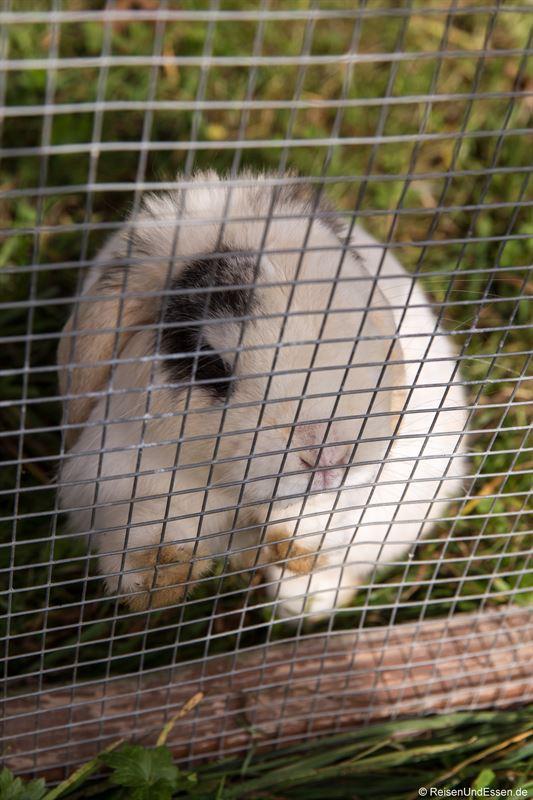 Kaninchen auf der Burgeralm
