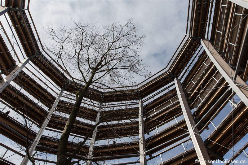 Turm und Baum im Baumwipfelpfad Steigerwald