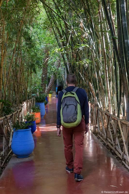 Allee mit Bambus im Jardin Majorelle in Marrakesch
