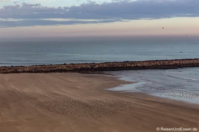 Möwen am Meer in Rabat