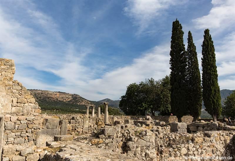 Ruinen und Pinienbäume