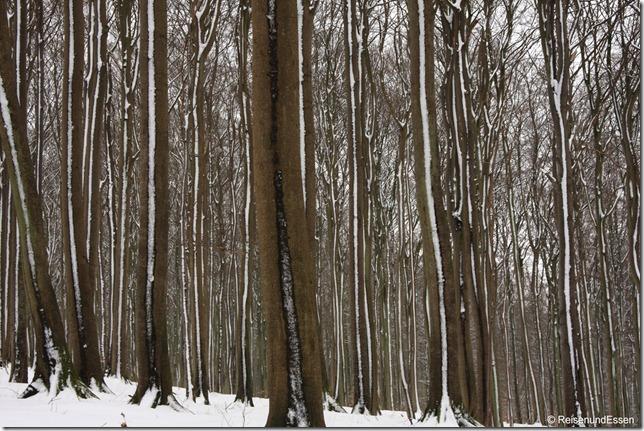 Durch Wald Richtung Sassnitz